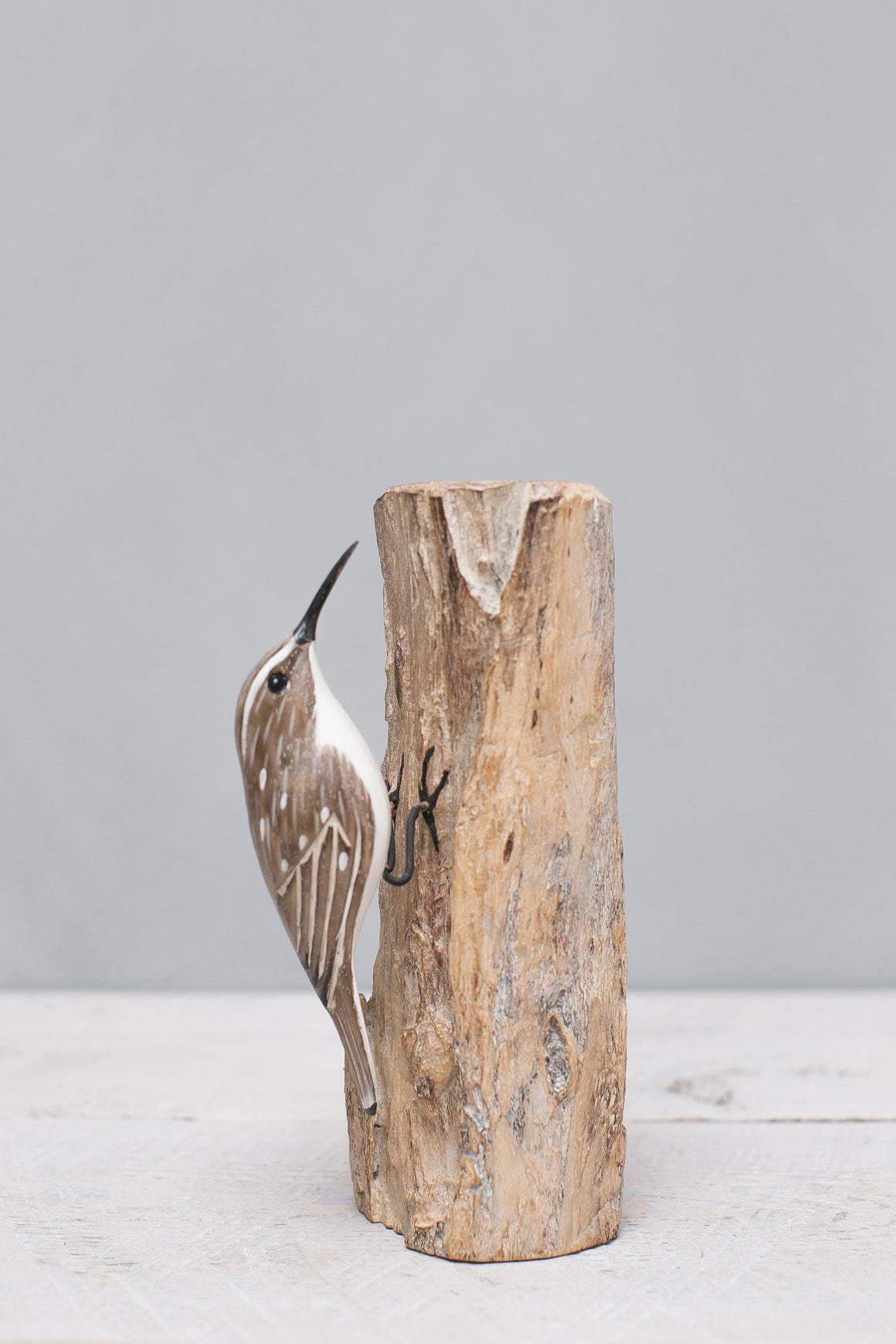 Brown Tree Creeper