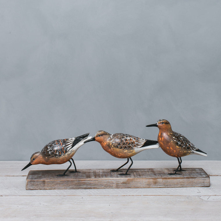 Red Knot Trio -aka Moon Bird