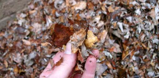 how-recycle-leaves-your-yard-3