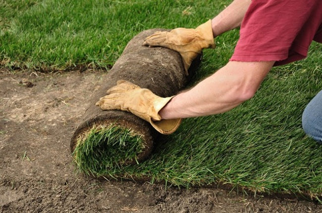 laying-sod-tallahassee-lawn-services-640x424