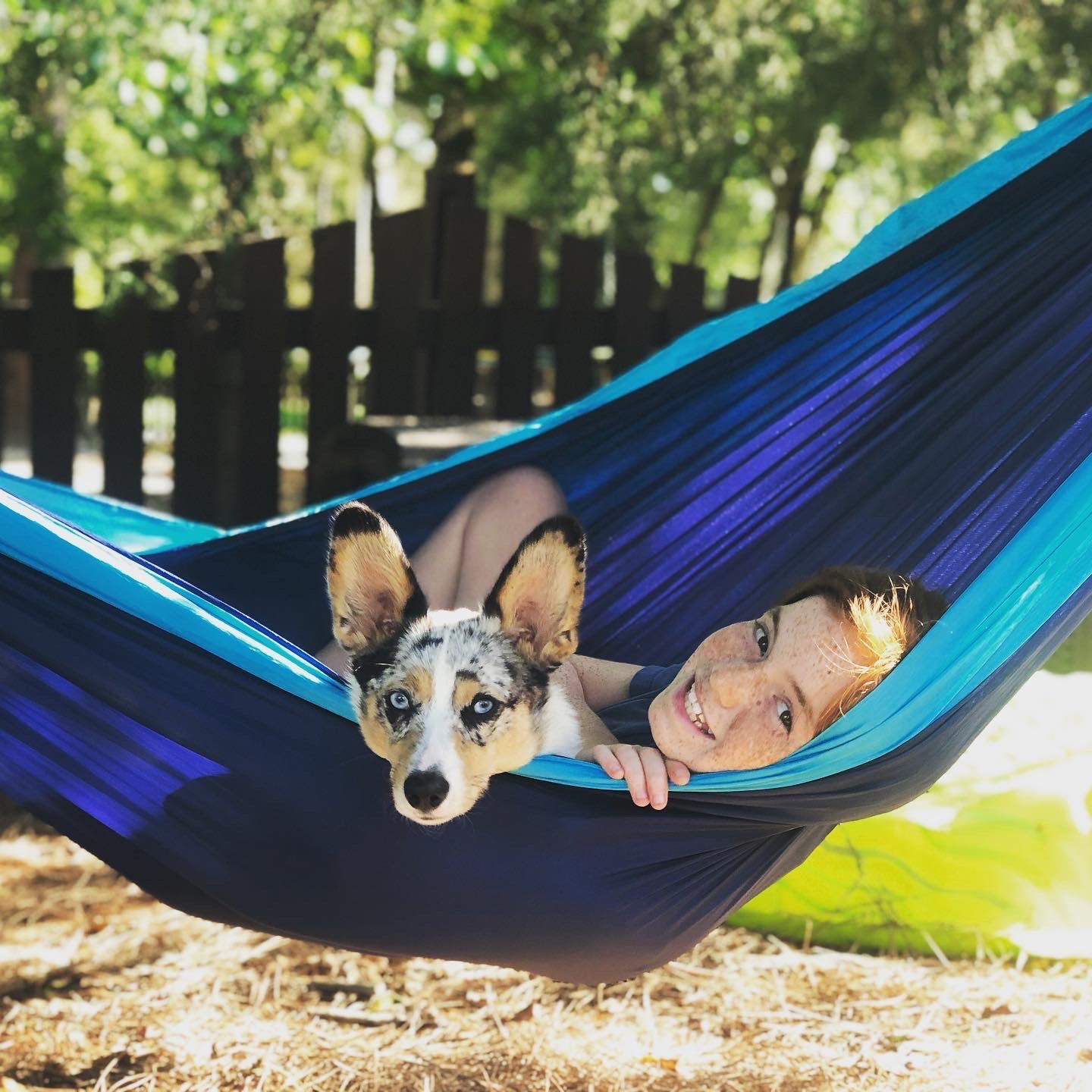 Hammocking With Your Pet
