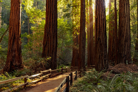 trail-through-redwoods-in-sequoia-national-park