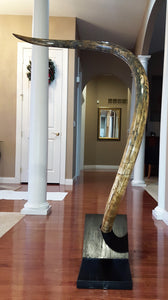 Fossil Woolly Mammoth Tusk