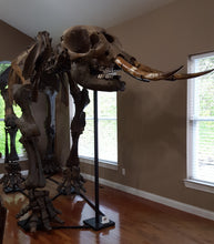 Load image into Gallery viewer, American Mastodon - SOLD