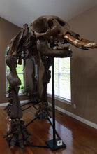 Load image into Gallery viewer, American Mastodon