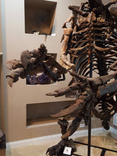Load image into Gallery viewer, Giant Ground Sloth - SOLD