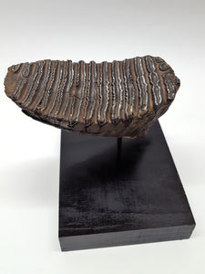 Alaskan Woolly Mammoth Tooth