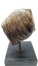 Load image into Gallery viewer, Alaskan Woolly Mammoth Tooth - Juvenile