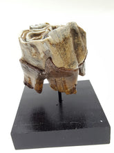 Load image into Gallery viewer, Woolly Rhinoceros Tooth