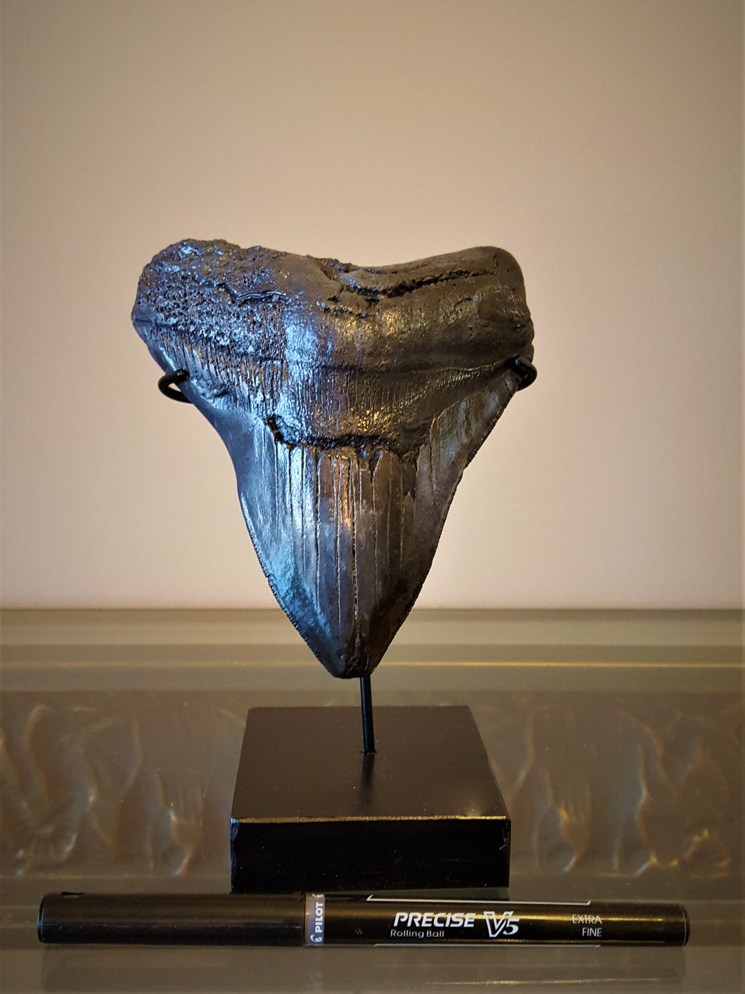 Megalodon Shark Tooth