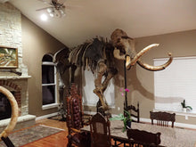 Load image into Gallery viewer, Alaskan Woolly Mammoth-SOLD