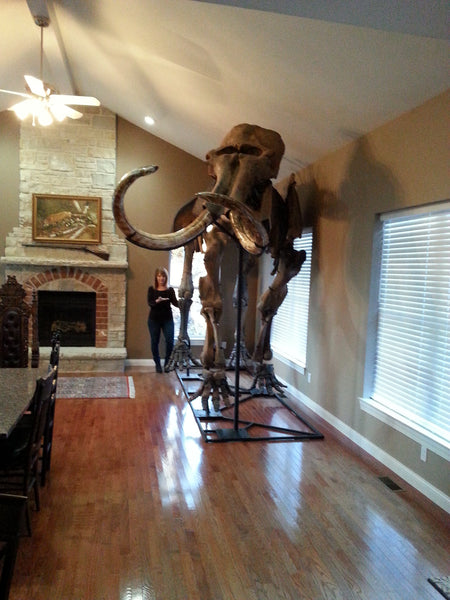 Alaskan Woolly Mammoth-SOLD
