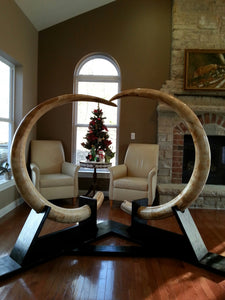 Impressive Matched Set Alaskan Mammoth Tusks - SOLD