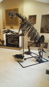 Giant Ground Sloth - SOLD