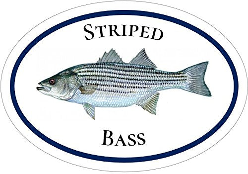 WickedGoodz Oval Vinyl Striped Bass Decal - Fishing Bumper Sticker - Perfect Ocean Fishing Gift-WickedGoodz