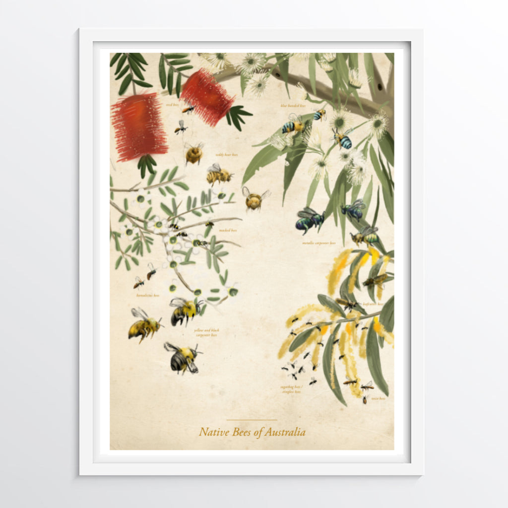 Bees poster - Native Bees of Australia (No background version) - educational bee poster / entomology poster