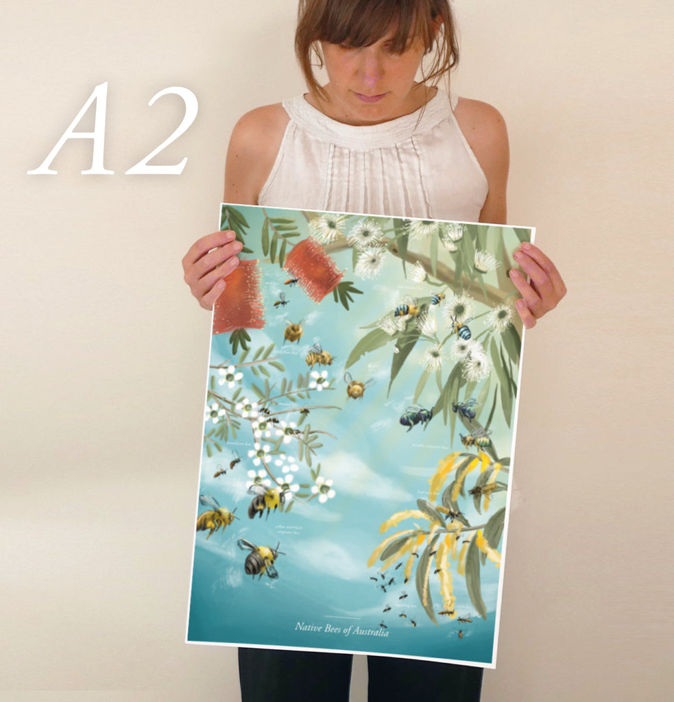 Native Bees of Australia poster - educational bee poster / entomology poster