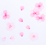 Bande Masking Roll Sticker Masking Tape Sakura Petals for Scrapbooking DIY-Craft.ph