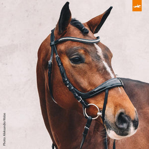 SCHOCKEMÖHLE SPORTS ANATOMIC BRIDLE - EQUITUS BETA