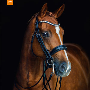 SCHOCKEMÖHLE SPORTS ANATOMIC DOUBLE BRIDLE - VENICE