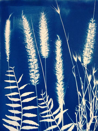 MOURNE GRASSES      Cyanotype Print                                                       Alice Burns