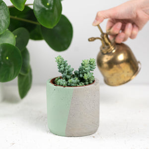 Green Colour Block Concrete Pot