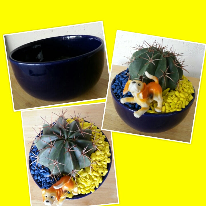 Cobalt blue dish, turned cactus home