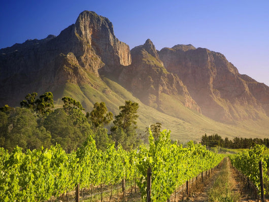It's Summer Somewhere - Wines of South Africa