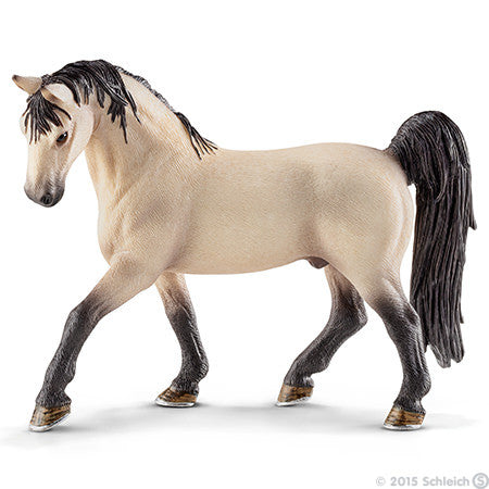 Tennessee Walker Stallion