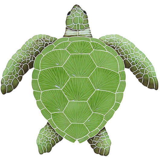 Loggerhead Green Turtle Large