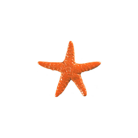 Starfish Orange 5