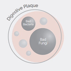 <b>Digestive plaque</b> builds in the gut, protecting bad bacteria and bad fungi