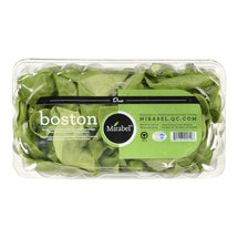 FLEUR DE MIRABEL BOSTON LETTUCE DUO 2 UN