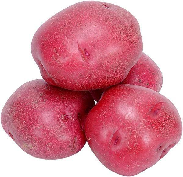 PATATES ROUGES 1 LB