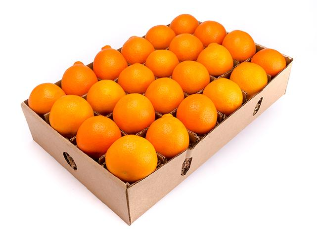 Minneola - Honeybells - In season winter fruit- FruitShareMinneola - Honeybells - In season winter fruit- FruitShare