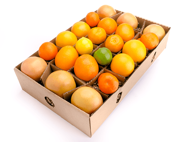 Beautiful mixed citrus fruit gift- Clementines, Satsumas, Navel oranges - winter fruit- FruitShare