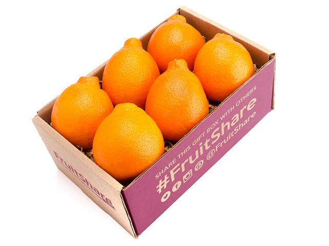 Honeybell minneola 6 ct - In Season winter fruit- fruitshare