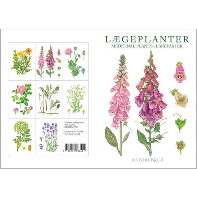 Notecards - Medicinal Plant Card Folder w/8 Note Cards