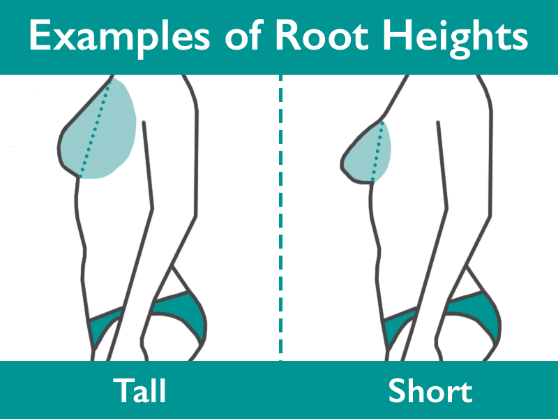 Examples of Root Heights