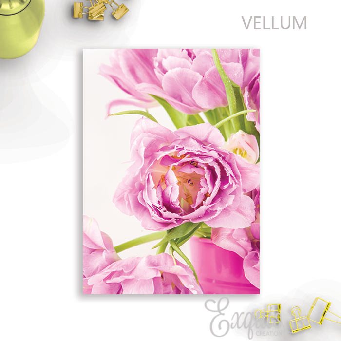 Vellum | Dashboard | Rose