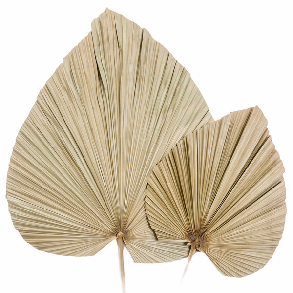 Palm Leaf Stem | Dried