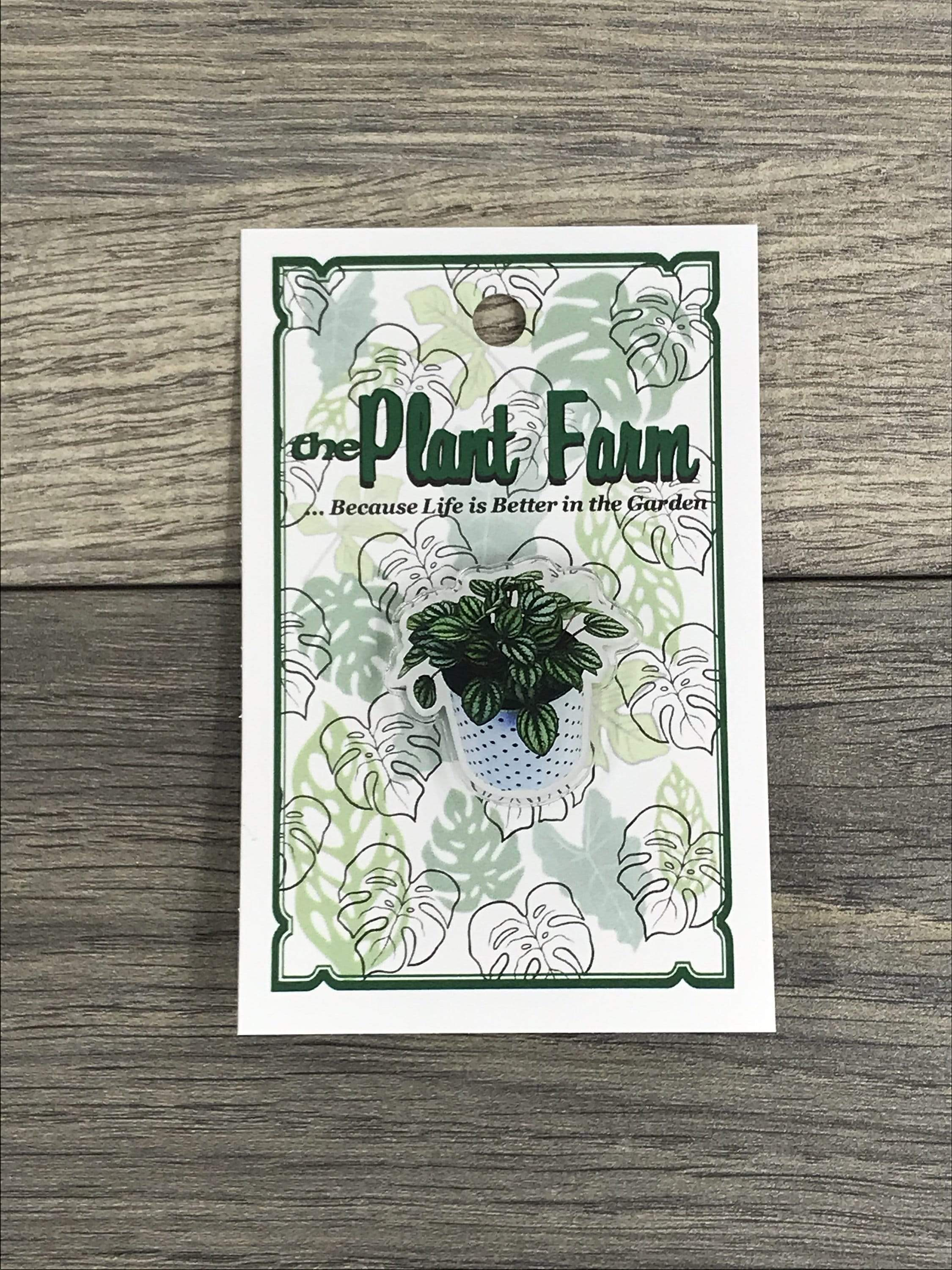 The Plant Farm Fun Stuff Peperomia Piccolo Banda Pin