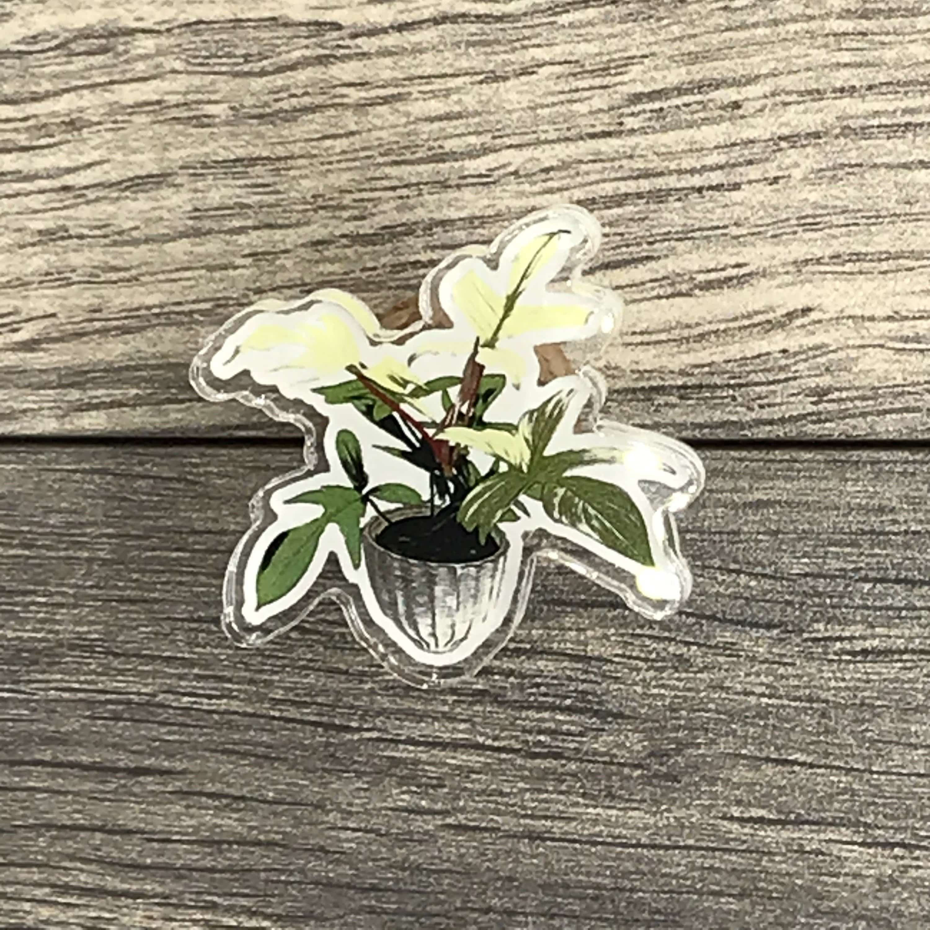 The Plant Farm Fun Stuff Philodendron Florida Ghost Pin