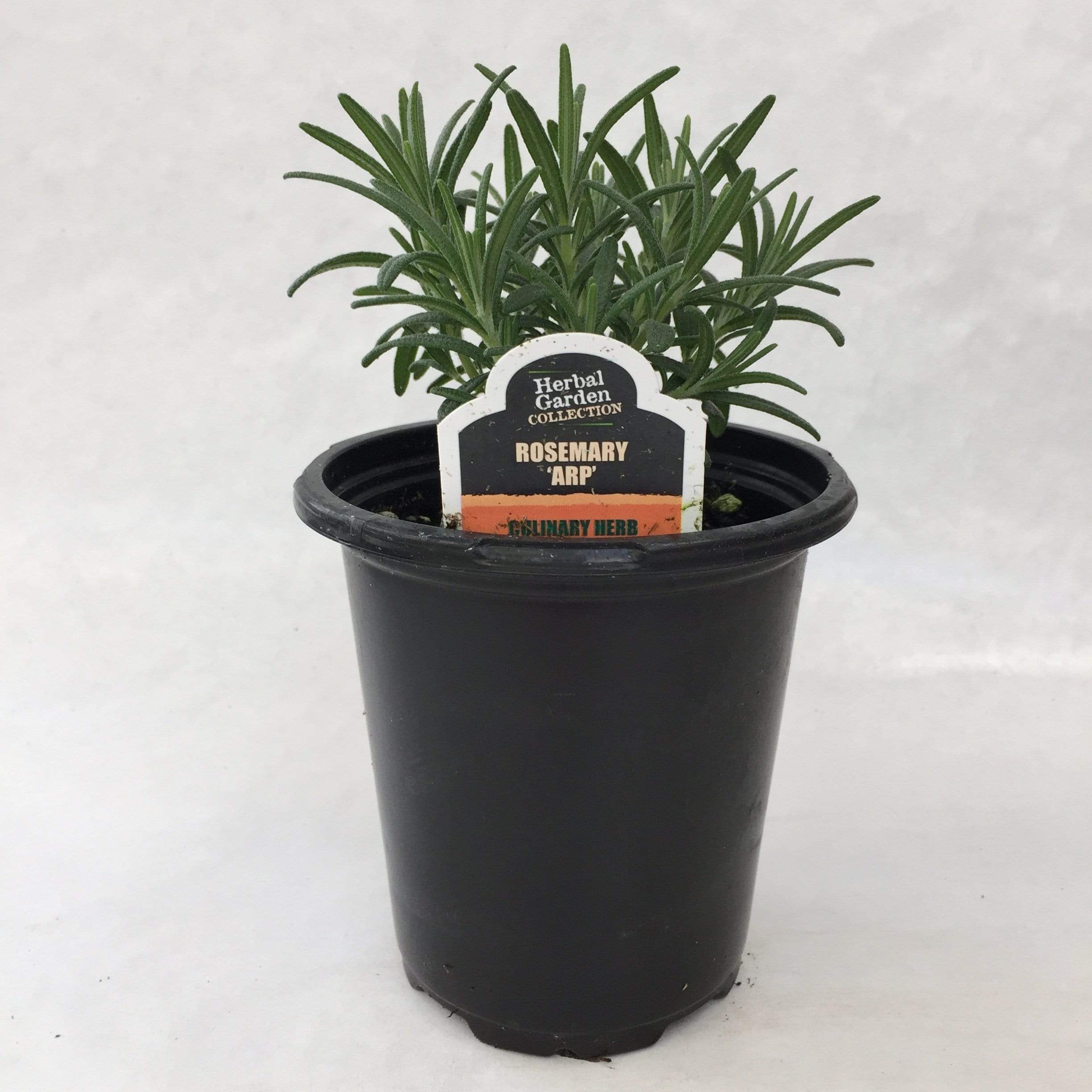 "The Plant Farm Herbs 4"" Plant Rosemary ARP Herb"