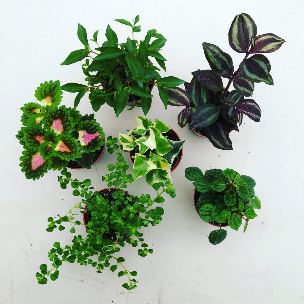 The Plant Farm Houseplants Foliage Gift Box, 9 Pack