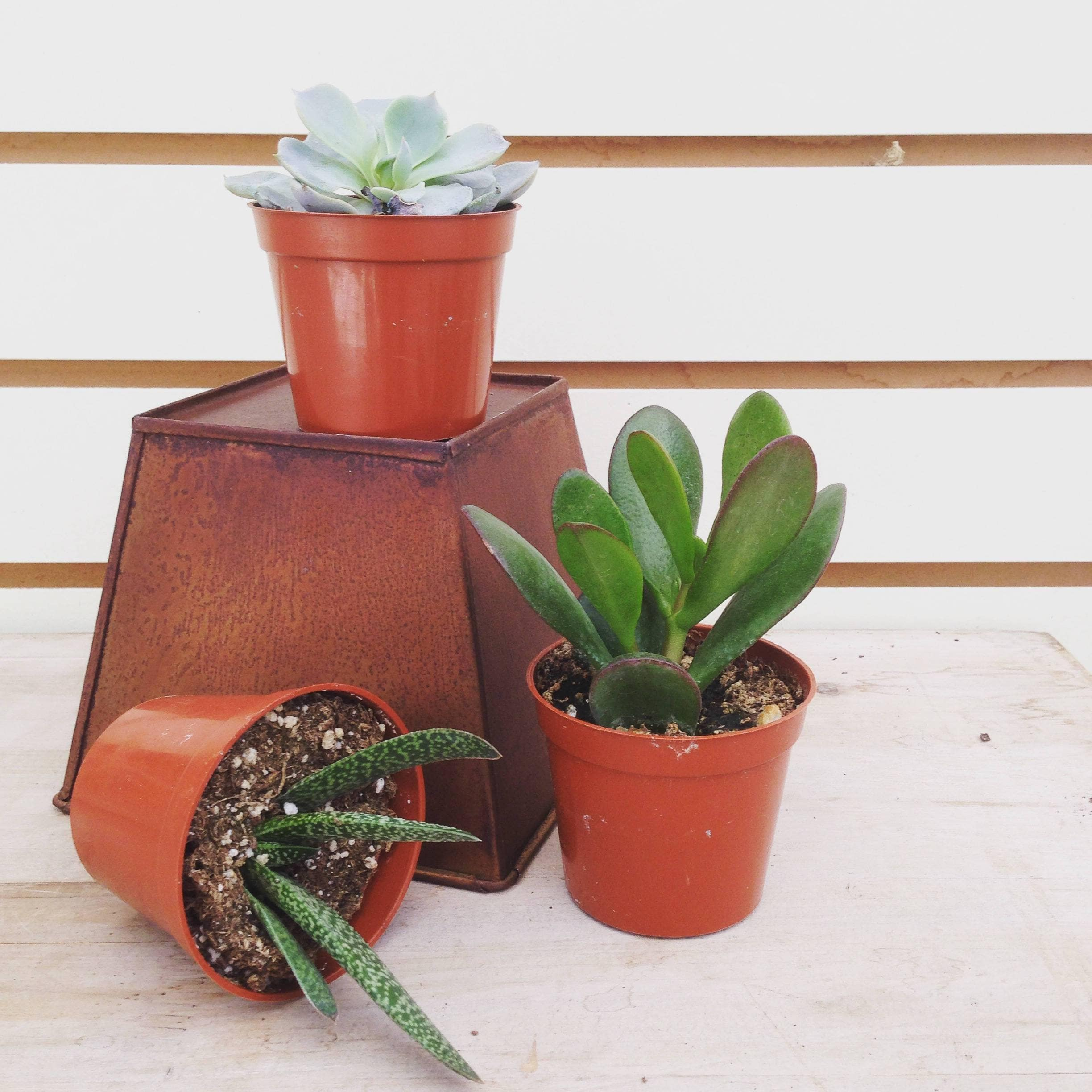 The Plant Farm Succulent Succulent Gift Box
