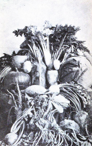Vegetable bouquet photo