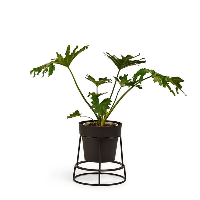 BENDO - POTPLANT - POT STAND - BLACK