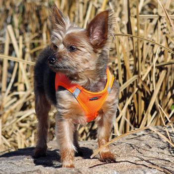 American River Dog Harness - Hunter Orange