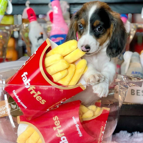 French Fries Squeaker Dog Toy - puppy